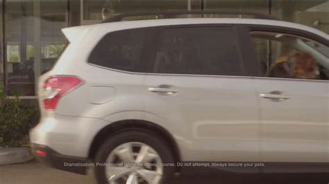subaru commercial with kid driving car autos post subaru commercial with dogs driving 2014 html autos post