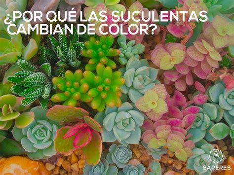 html imagenes que cambian 191 por qu 201 las suculenta cambia de color saperes