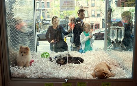 puppies store new jersey passes new that requires pet stores to sell only rescue animals bored