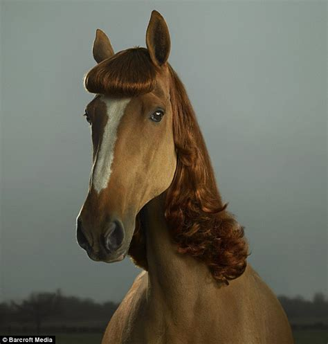 hairstyles for horses pictured the hilarious and utterly pointless horses