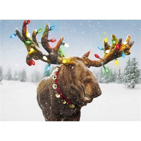 funny moose xmas light antlers single christmas card by