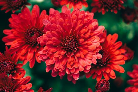 autumn flowers flowers fall hd wallpapers dat nature