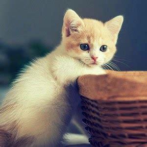 Kaos Kaki Hewan Peliharaan Anjing Kucing Lucu 1 cat 43 fakta unik tentang kucing