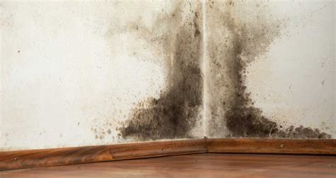How To Prevent Mold In House by How To Prevent Mold In Your Home Insurancehub