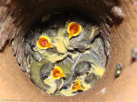 unusual bird s nest gallery ebaum s world