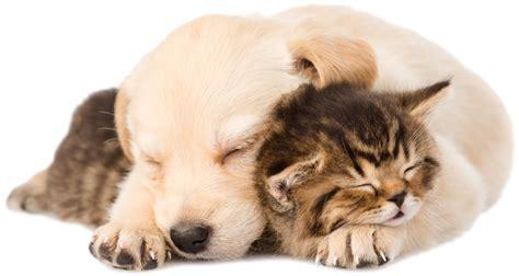 tlc puppy puppy kitten png www imgkid the image kid has it