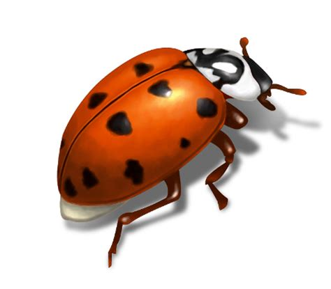 Orkin Bed Bugs Lady Bug Control How To Get Rid Of Asian Lady Beetles