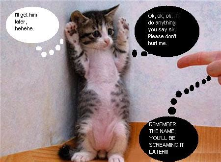 funny animal pictures with sayings vivecsharing