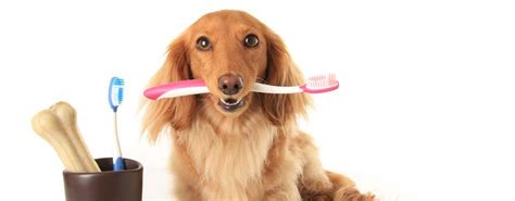 puppy toothbrush best toothbrush review of 10 toothbrushes for dogs 2016