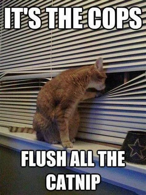 Hilarious Cat Memes - lol cats 12