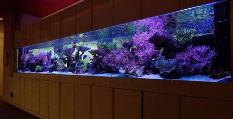 Aquarium Design Glasgow | aquatic design centre