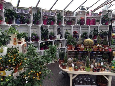 exciting   houseplants  garden centre blog
