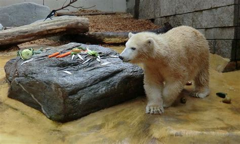 zoologischer garten essen www zoo wuppertal net abendfressen f 252 r vilma und anori