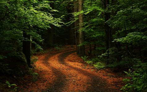 forest road best nature wallpapers