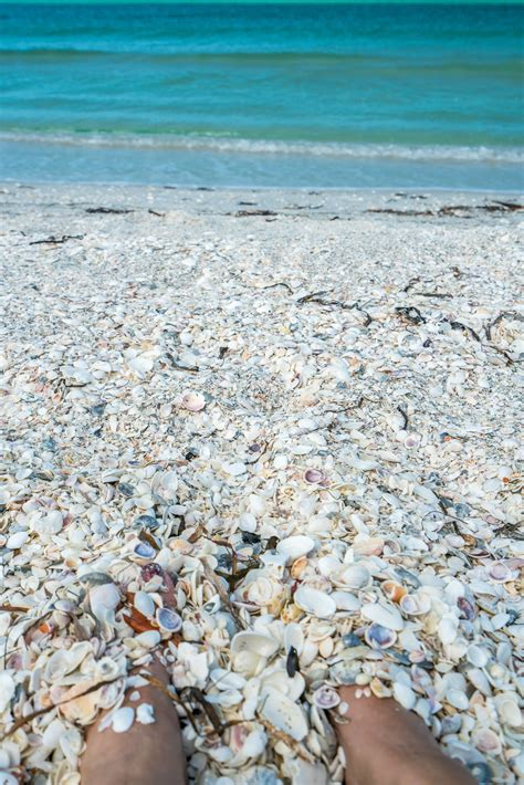 best beaches for seashells the world s best shelling is at the beaches of fort myers