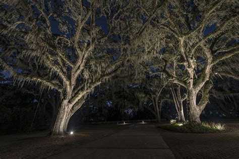Tree Landscape Lighting Live Oaks