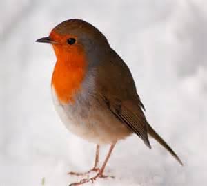 robin bird driverlayer search engine