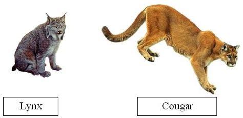 gc12wqn cougar cache splash (traditional cache) in