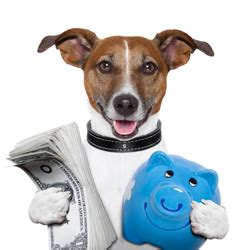 how much money is a puppy what does it cost to hire a walker or pet sitter in los angeles pet care la