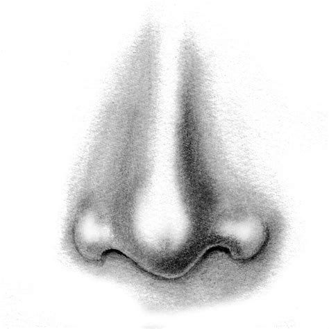 Drawing Noses by Portraiture Foundations In Pencil And Charcoal