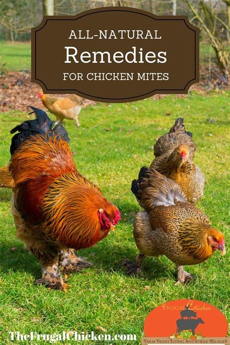 The Chicken Keeper S Problem Solver 695 best the hen house images on animals raising chickens and country