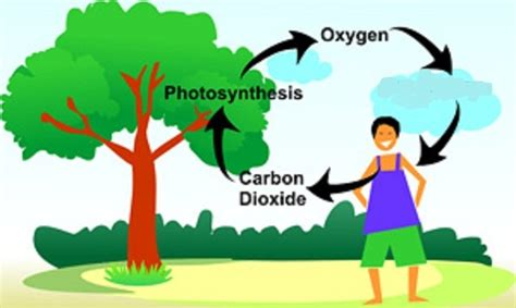 Plants And The Environment adaptations and the environment ms a science