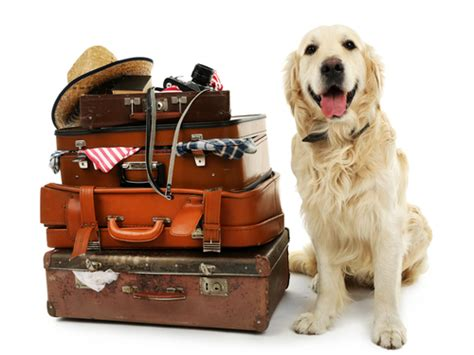 how to make your puppy you how to make arrangements for your when you need to travel pet wants