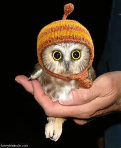 What Are Baby Barn Owls Called Owl Funny Bird Pictures