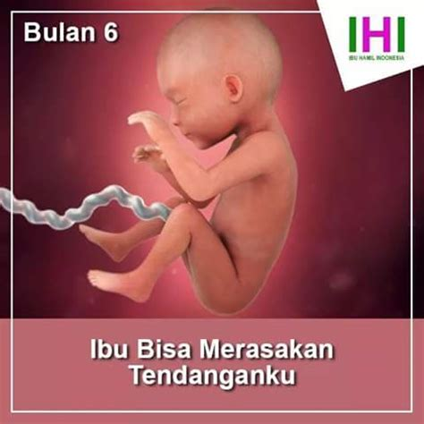 Janin Jarang Bergerak Usia 9 Bulan Gambar Proses Tumbuh Kembang Bayi Dalam Kandungan
