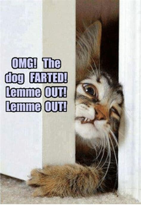 Omg Cat Meme - omg the dog farted lemme out lemme out dogs meme on
