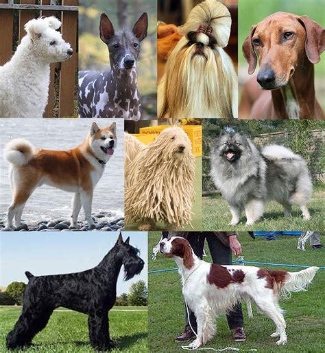 Imagenes De Animales Wikipedia | 犬 维基百科 自由的百科全书
