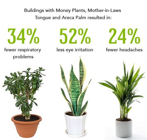 best houseplants for clean air best plants to clean the air new home projects