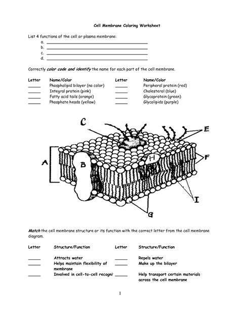 cell membrane coloring worksheet answers cell membrane worksheet search interactive