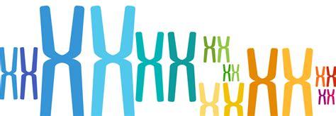 harmony test prenatalni test harmony harmony