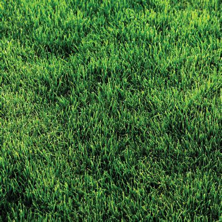 Paper Grass - sbc sug s330 jpg