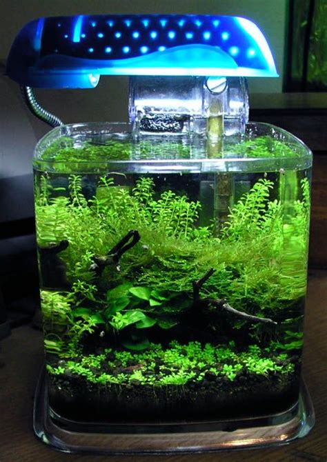 diy aquascape diy cube aquascapes google search aquariums