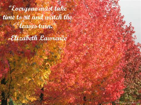 quotes about fall colors quotesgram autumn foliage and quotes quotesgram