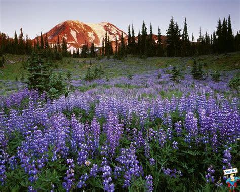 prati in fiore sfondi prati di fiori 81 sfondi in alta definizione hd
