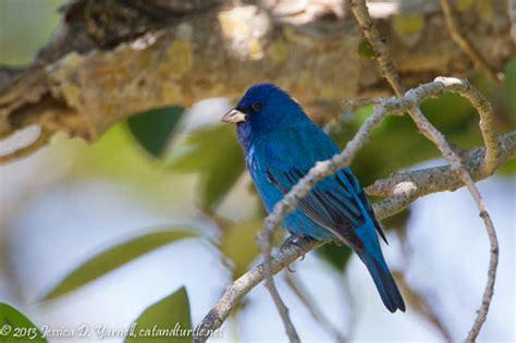 central florida backyard birds central florida backyard bird identification