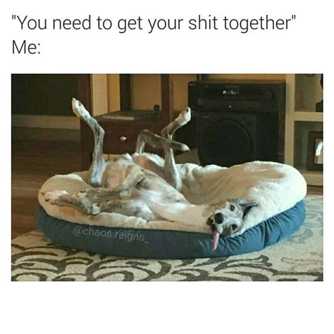 Get Your Shit Together Meme - you need to get your shit together me pet humor and