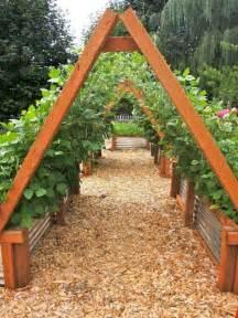 raised bed tomato trellis 25 best ideas about raised beds on garden