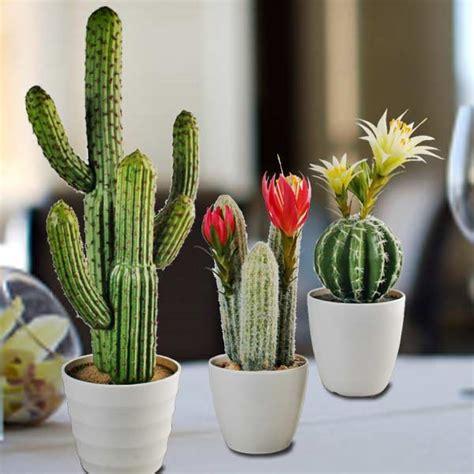 Mini Cactus mini cactus plants