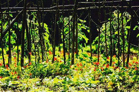 Planter En Juin arbustes l 233 gumes quoi planter en juin ooreka