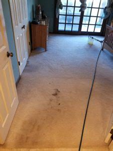 sofa cleaning san diego carpet cleaning san diego absolutely clean agency