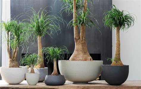 decoracion de interiores con plantas de sombra plantas de interiores resistentes y lo espec 237 fico de sus