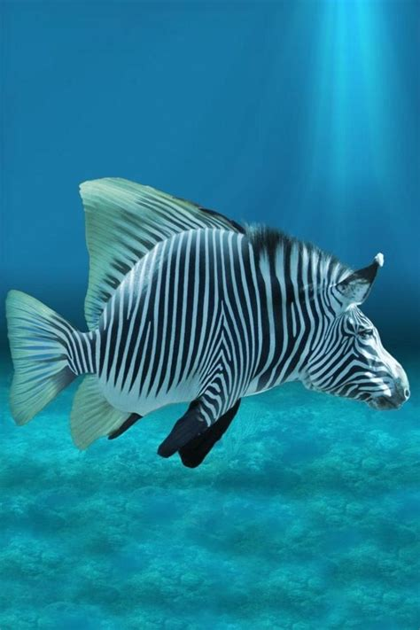 Bali Home Decor Online by 22 Best Images About Zebra Fish On Pinterest Abstract