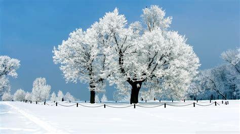 white tree white tree winter wallpaper 1920x1080 wallpoper