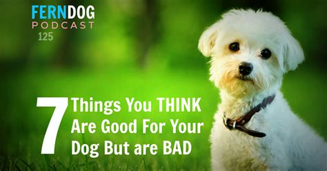 are dogs bad for you 7 things you think are for your but are bad ferndog