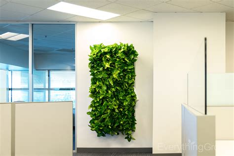 interior landscaping by everything grows interior landscaping by everything grows