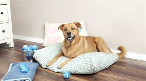 cuscini per cani grandi cuccia per cani in stoffa o in legno dalani